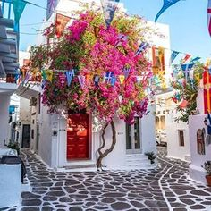 The beautiful flowers and colours of magical Mykonos