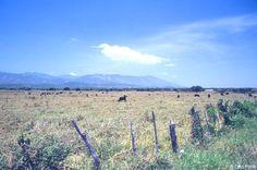 Producción agricola del Valle de San Juan a punto de desaparecer por falta de apoyo