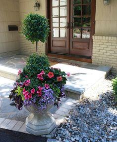 flores del sol: eugenia topiary container garden--petunias, hibiscus, creeping jenny, lobelia, sweet potato vine