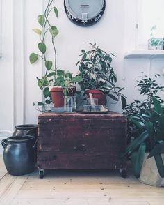 Grönt är skönt! Höganäskrusen ska snart få bli med kaktusar 🌵🌵👌🏻