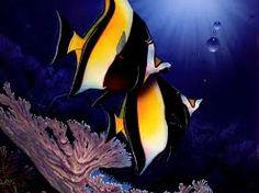 Resultado de imagem para sugestão  decoração de aquarios com beta