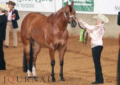 So you decided to enter a performance halter class – here are 10 secrets that you need to know.