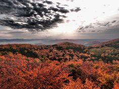 La forêt du Jura alsacien en automne - Photo prise depuis la tour du Rossberg - #Alsace - Crédit : OT Sundgau