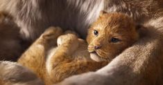 "Walt Disney Pictures unveiled a teaser trailer for upcoming animated film ""The Lion King"" directed by Jon Favreau, featuring the voices of Donald Glover, Seth Rogen and Beyoncé. Le Roi Lion 1, Le Roi Lion Film, Le Roi Lion Disney, Donald Glover, Simba Bebe, Baby Simba, Lion King Remake, The Lion King, Lion King Songs"