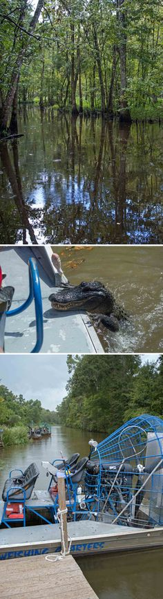 A must-do when in New Orleans - a swamp tour! Beautiful jungle-like scenery and many alligators and water snakes to be seen - sometimes a little too close for comfort.  heneedsfood.com