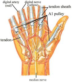 Another pinner says: TRIGGER FINGER or THUMB ... To treat trigger finger, the goal is to reduce swelling and scar tissue on the affected flexor tendon and its sheath to stop the tendon from catching. Cold compression therapy and ultrasound treatments are the most effective non-surgical method to treat the pain, swelling, inflammation, and scar tissue build up caused by trigger finger.
