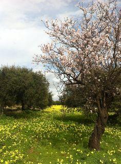 Primavera - Frühling - spring @ Villacidro, Carbonia-Iglesias