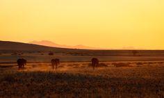 Namibia - Born to be wild by Fabrizio Fenoglio on 500px.