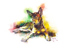 Using coloured pencils and graphite to setup with oils over the all. A fun time capturing a Kelpie pup from my collection of images about the Australian Kelpie dogs. An 'ekphrastic' twist or two of my imagination...