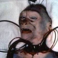 """This is wrong. Oh, and the results of this """"test?"""" """"More research needed"""". Vivisection is murder. Vivisection is fraud."""