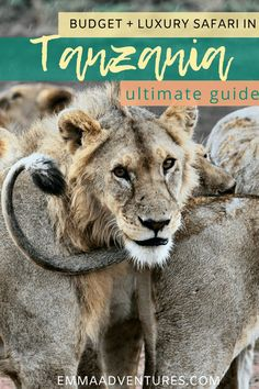 Feb 12 2020 - The ultimate guide to luxury and budget safari in Tanzania Africa! Including Ngorongoro Crater and the Serengeti! Read it now! New Mexico Camping, Village Tours, Africa Destinations, Holiday Destinations, Travel Destinations, The Great Migration, Tanzania Safari, Safari Adventure, Adventure Travel