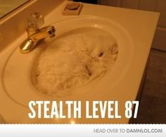 white ninja cat :)