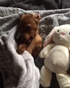 Cute emergency is the funny, cute animals video channel. Critiquing the cutest animals online! We will share daily funny, cute and adorable pets video in thi. Cute Funny Animals, Cute Baby Animals, Funny Dogs, Animals And Pets, Funny Dachshund, Dachshund Puppies, Dachshunds, Cute Puppies, Cute Dogs