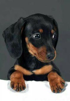 This is cute cute cute.