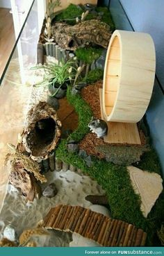 Hamster – nice picture I need this! To those who think so, it's not spoiled, it's natural but predator-free. Perfect mouse/gerbil/hamster home. The moss looks wonderful. Big nice hamster home. Teddy Hamster, Cage Hamster, Gerbil Cages, Hamster Life, Hamster Stuff, Fancy Hamster, Dwarf Hamster Toys, Hampster Cage, Diy Hamster House