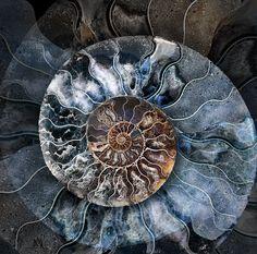 Fine Art Print-Ammonite Fine Art Print on Paper made in the UK Fine Art Prints, Framed Prints, Canvas Prints, Cross Section, Nautilus Shell, Patterns In Nature, Nature Pattern, Ammonite, Poster Size Prints