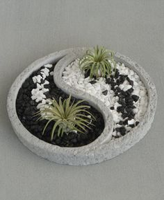 Yang Air Plant Zen Terrarium Relaxing Yin Yang inspired Zen terrarium comes with colorful pebbles and two air plants.Relaxing Yin Yang inspired Zen terrarium comes with colorful pebbles and two air plants. Indoor Vegetable Gardening, Container Gardening, Organic Gardening, Air Plants, Indoor Plants, Indoor Herbs, Cactus Plants, Keramik Design, Concrete Crafts