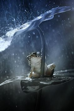 Grenouille s'abritant So cute, out of the rain! Animals And Pets, Funny Animals, Cute Animals, Beautiful Creatures, Animals Beautiful, Sapo Meme, Into The Wild, Funny Frogs, Fotografia Macro
