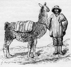 Image result for llama animal asustada saltando Llamas Animal, Camel, Animals, Animales, Animaux, Camels, Bactrian Camel, Animais, Animal