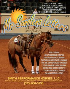 Mr Sunolena Letters AQHA Performance Champion. Jarrett Smith Quarter Horses proudly standing this PROVEN performance stallion with wins in Reining, Working Cowhorse, Tie-Down, Team Roping and Cutting!