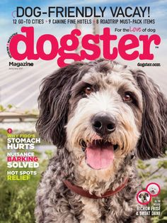 Dogster magazine is the perfect periodical for anyone who loves his or her canine. You will love reading articles that pertain to caring for and training your favorite animal. Different Types Of Dogs, Foster Dog, Fine Hotels, Bichon Frise, All Dogs, Dog Friends, The Help, Dog Lovers