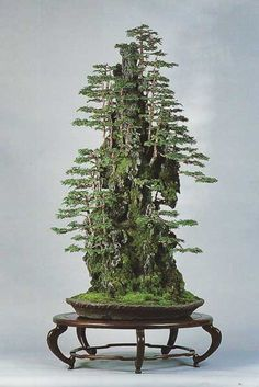 Bonsai Tree Mountain
