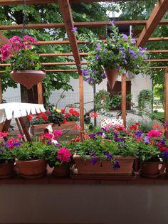 My own little garden