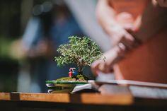 bonsai dos noivos como arranjo do aparador do altar no casamento.  #bonsai #wedding #decor #weddingdecoration  (Fotografia: Diogo Perez)