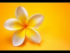 Plumeria wonderfully fragrant flower used in Hawaiian Lei making. Plumeria wonderfully fragrant flower used in Hawaiian Lei making. The post Plumeria wonderfully fragrant flower used in Hawaiian Lei making. appeared first on Easy flowers.