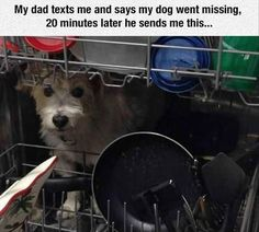 Cute Funny Animal Memes That Will Make You Smile - 22