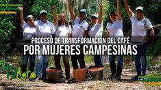 Proceso de Transformación del Café por Mujeres Campesinas - TvAgro por J...