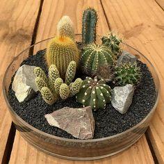 cactus flower and tibetan ginseng hydrating mist Mini Cactus Garden, Cactus House Plants, Cactus Terrarium, Succulent Gardening, Cactus Decor, Garden Terrarium, Cactus Flower, Cacti And Succulents, Plant Decor