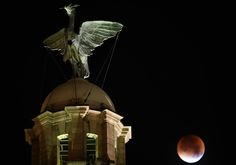 ". The moon turns red during a total eclipse, seen behind the iconic Liver Bird on the Liver Building in Liverpool, north west England, early on September 28, 2015. For the first time in decades, skygazers were in for the double spectacle on September 28 of a swollen ""supermoon\"" bathed in the blood-red light of a total eclipse. PAUL ELLIS/AFP/Getty Images"