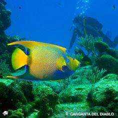 Punta Sur, Garganta del diablo, Cozumel. Quintana Roo, México. Para ingresar a esta maravilla de la naturaleza es preciso bajar, aproximadamente, 18 metros de profundidad. Su interior es tan magnífico como espectacular. Barracudas, peces sapo, rayas águila, tortugas mordedoras, tiburones toro te esperan en este lugar.