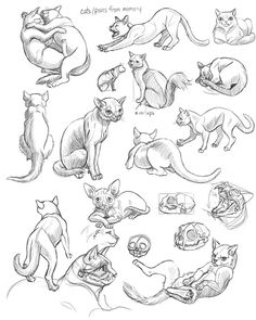 Schoolism - Gesture Drawing Week 5 — Chalk Full of Dreams Cat Reference, Art Reference Poses, Drawing Reference, Anatomy Reference, Cat Sketch, Drawing Sketches, Contour Drawings, Oc Drawings, Charcoal Drawings