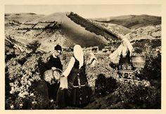 Розобер в Долината на розите от 1935 г. / Rose harvesting in the Rose Valley in 1935