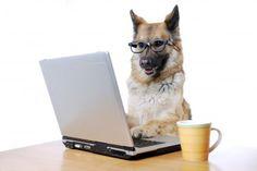 Amener son chien au travail serait bénéfique pour la société et ses employés