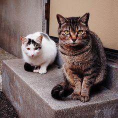 "@shoji_ogawa_unlimited's photo: ""#釜ヶ崎#kamagasaki #cat"""