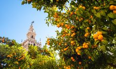 'A role model': how Seville is turning leftover oranges into electricity | Renewable energy | The Guardian Elizabeth Ii, Stuff To Do, Things To Do, Water And Sanitation, Parks Department, Water Purification, Scottish Highlands, Water Plants, Andalucia
