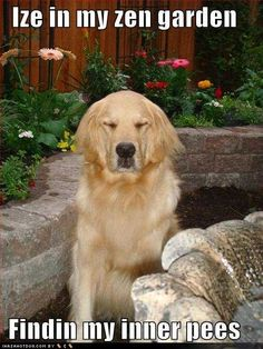 Dog finds inner peace