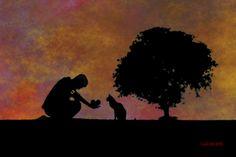 Lukecats, cats and men, kindness, rescuer, cats, Romeo, Monet, Bones, Marvin, Artemisia, Ladycat, Cheetah, Ugly, Gattona, Squama, Big gray, White&gray, Gattone