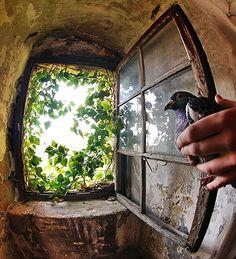 Abriendo Puertas y Ventanas...(Source: lovemoon, via morning-dove)
