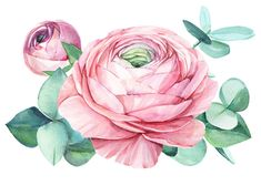 Watercolor Plants, Watercolor Drawing, Watercolor Paintings, Illustration Art Drawing, Art Drawings, Flower Png Images, Acrylic Painting Flowers, Flower Sketches, Botanical Art