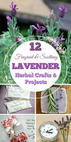Lavender is one of the most popular herbs with recipes and remedies dating back for thousands of years. Whether you grow or buy freshly harvested lavender, there are many creative projects to capture the fragrance and essence of this beloved plant includi