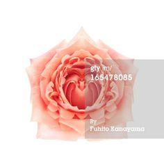 Stock Photo : Symmetrical Rose 2