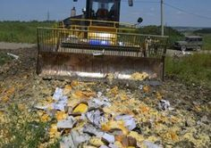 Russia Destroyed Banned European Cheeses with Bulldozers  Food News