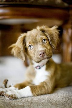 The Adorable Dog One