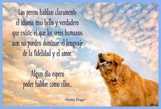 74 Mejores Imágenes De Frases De Perro 3 Dog Cat I Love Dogs Y