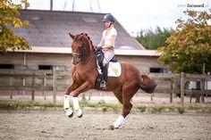 Paarden te koop: Akitros