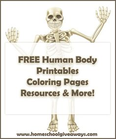 FREE human anatomy printables you may enjoy: coloring pages, lapbooks, unit…